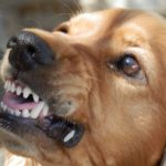 Шепоток, чтобы собака не укусила