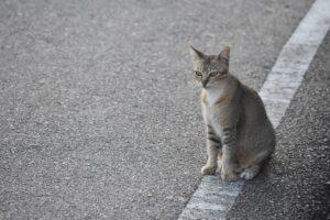 Если между вами кошка пробежала