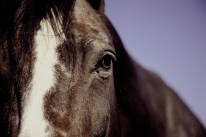 Шепоток от гноящихся глаз у животных