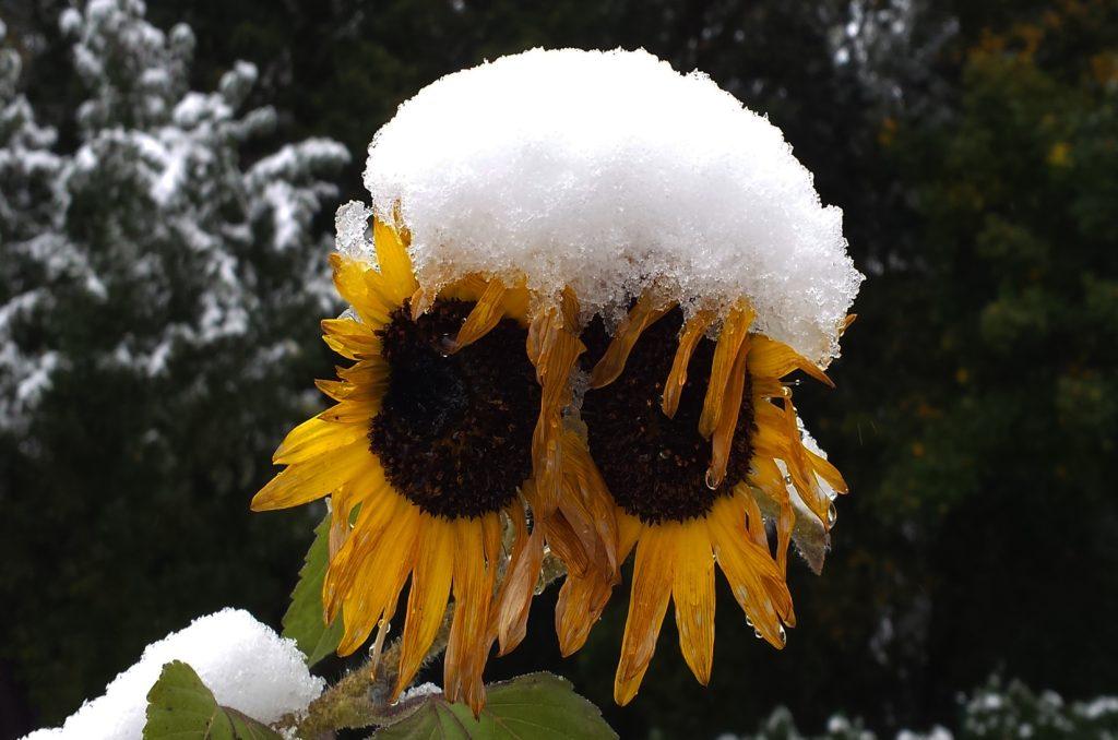 Заговор не первый снег, чтобы всем нравиться