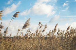 Заговор на ветер чтобы желание исполнилось