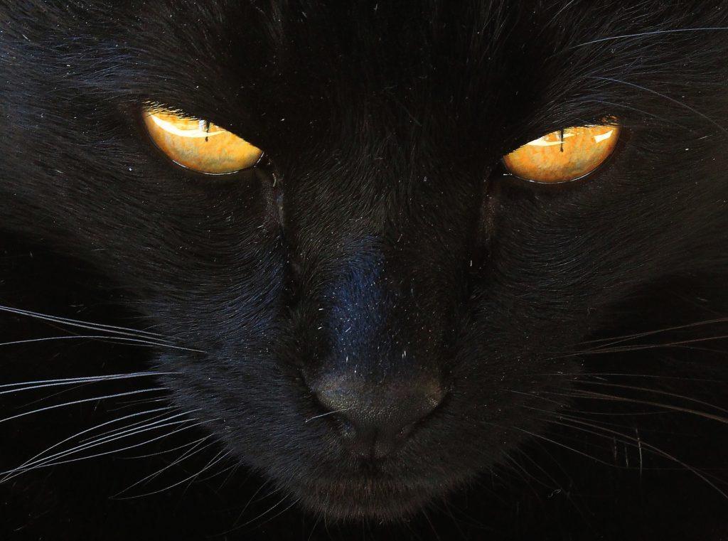 Если вы суеверны шепоток от плохих примет