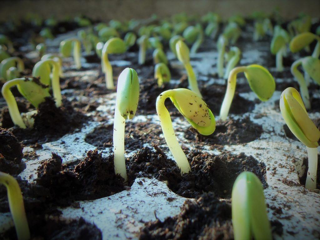 Заговор на рассаду на хороший урожай