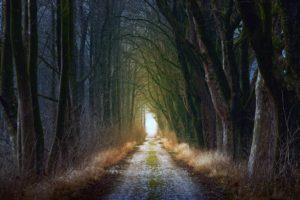 Шепотки чтобы в лесу не заблудиться