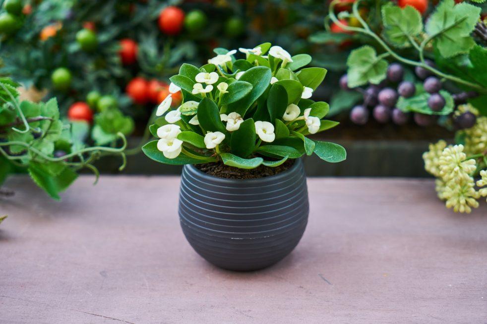 Горшечный цветок для удачного бизнеса