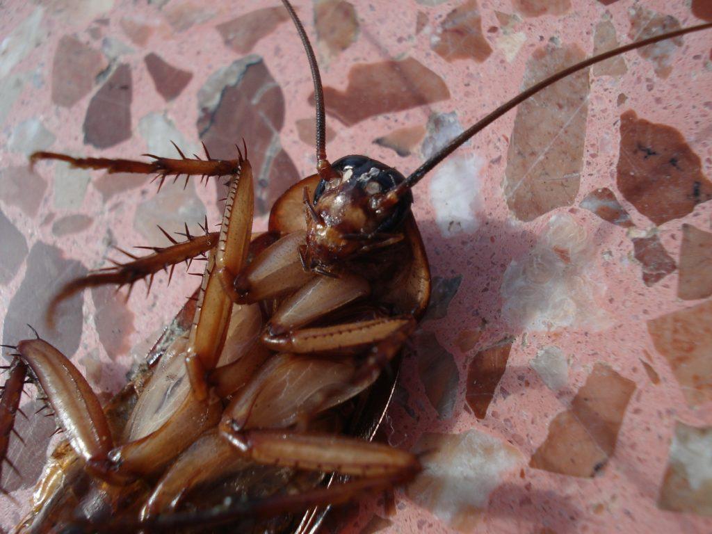 Если в доме завелись насекомые