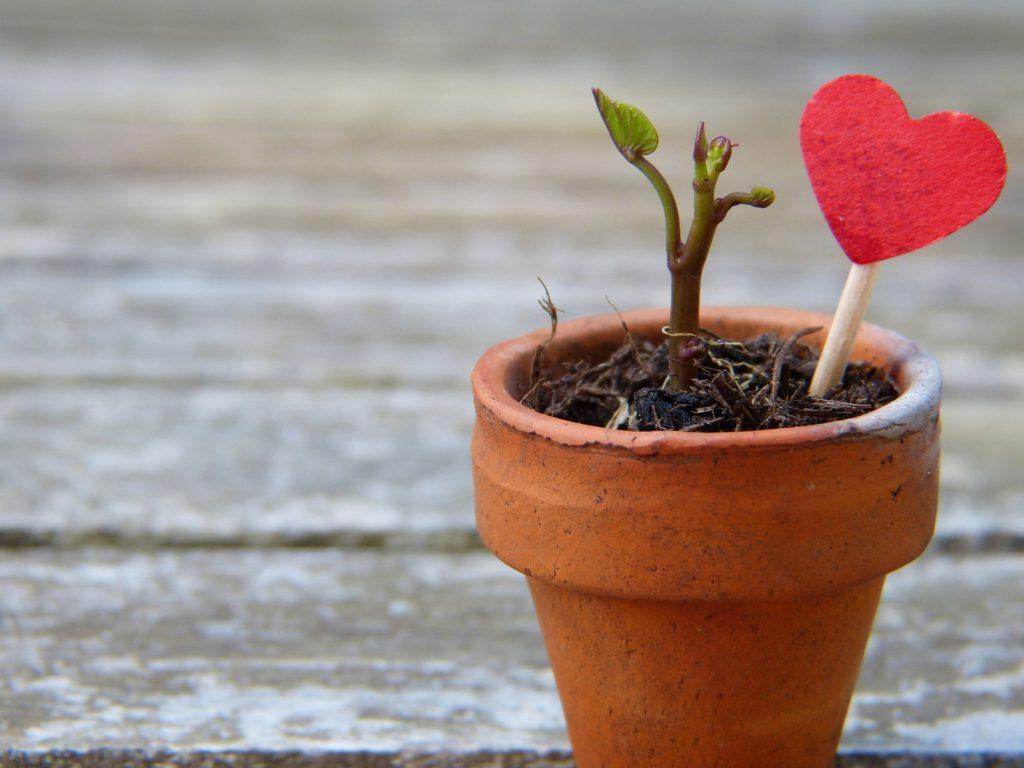 Шепоток, если цветы в горшках плохо растут