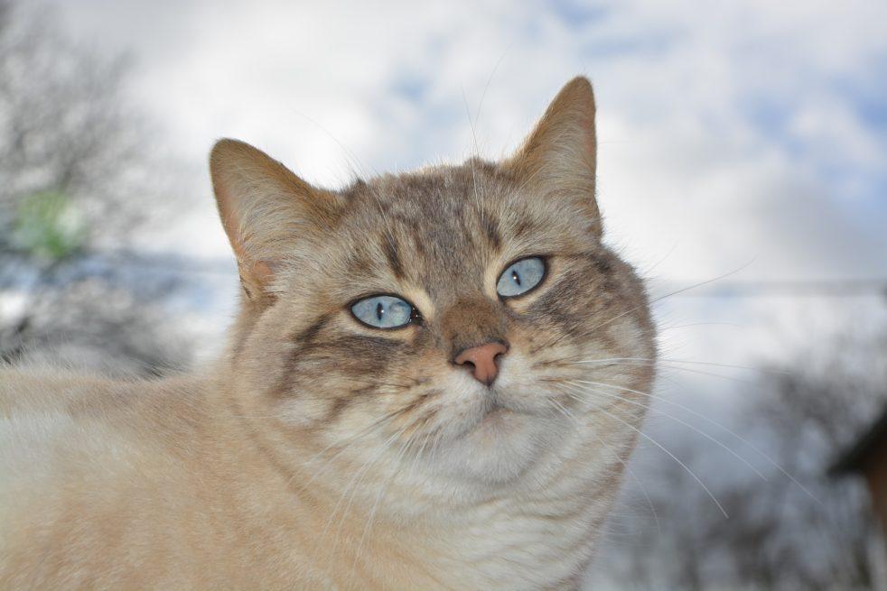 Заговор на кошку для защиты дома