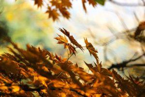 Лесной осенний заговор для здоровья