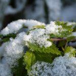Заговор на первый снег для здоровья