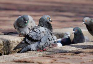 Заговор на птиц от нелюбви свекрови