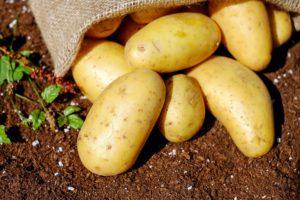 От всех бед: секреты картофеля, о которых вы даже не догадывались