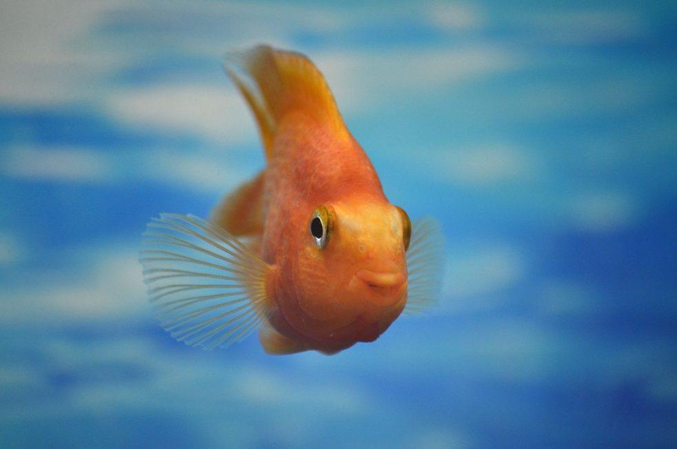 Рыбный заговор на денежную подработку