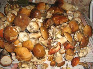 Заговор для грибников перед походом в лес