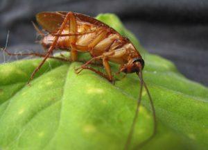Заговор от тараканов и других насекомых
