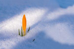 Зимний ритуал на достаток и богатство